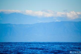 Isla Del Cano Isla Violin Osa Peninsula Corcovado Costa Rica Pure Nature Wildlife