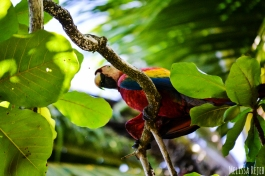 Drake Bay Costa Rica nature wildlife jungle selva animals osa peninsula