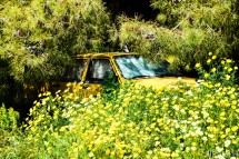 Yellow car yellow flowers lagonisi greece flower power